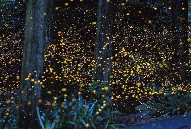 firefly-010.jpg