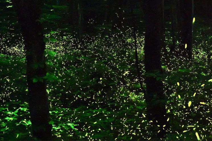 firefly-014.jpg