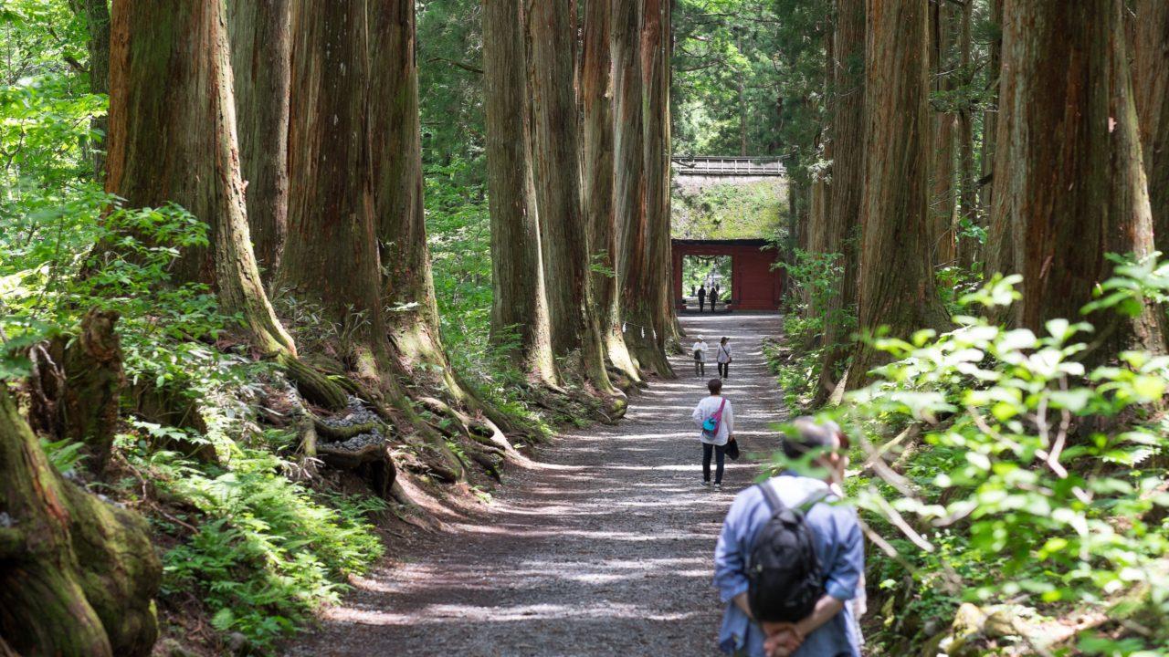 Giang-Sugi-Trees-at-Togakushi-1280x720.jpg