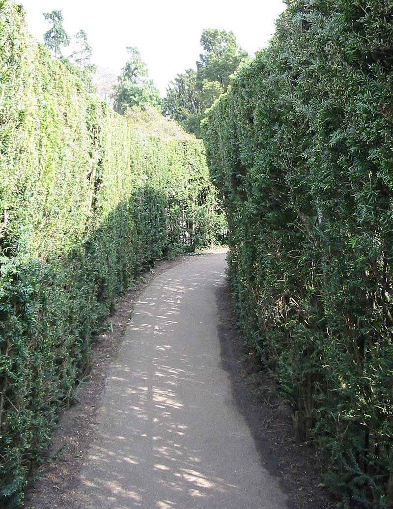 Hampton_Court_Avri_2009_42.jpg