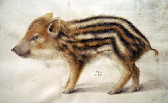 Hoffmann,_Hans_-_A_Wild_Boar_Piglet_-_1578.jpg