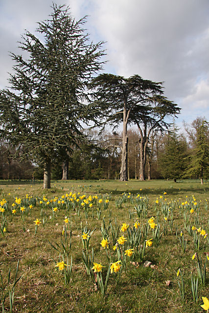 Ickworth_House_gardens_-_geograph.org.uk_-_1221200.jpg