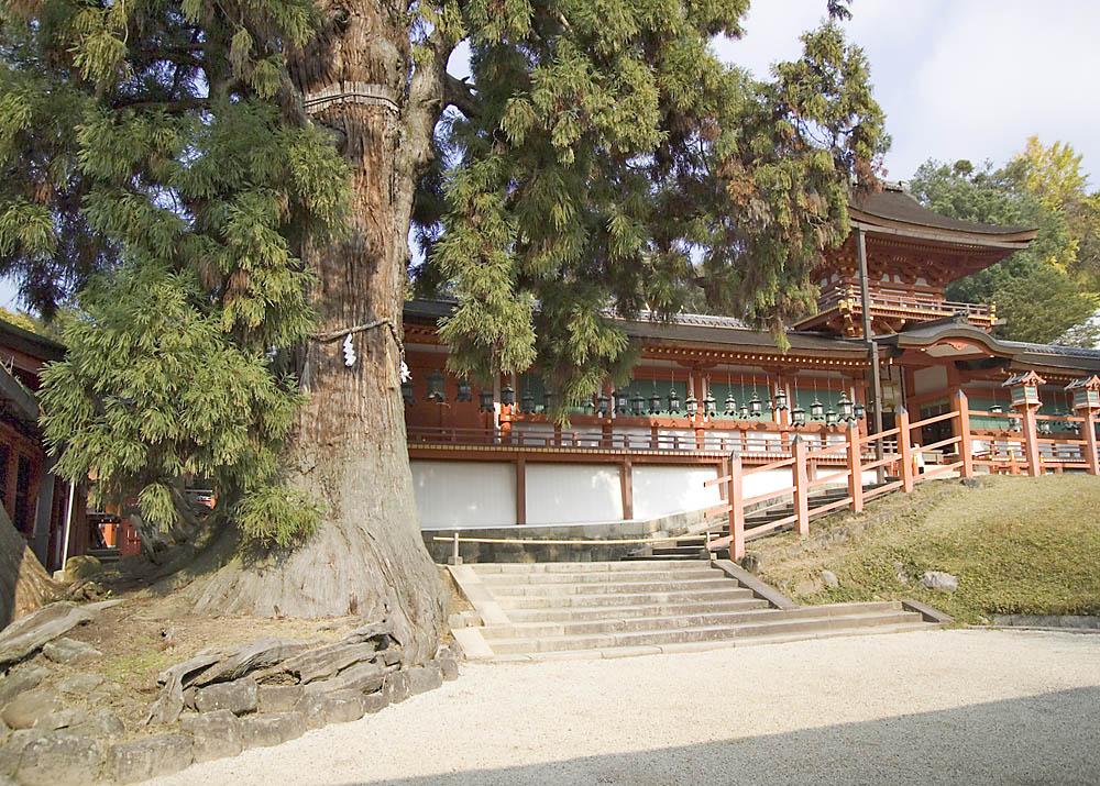 KasugaShrine0395.jpg