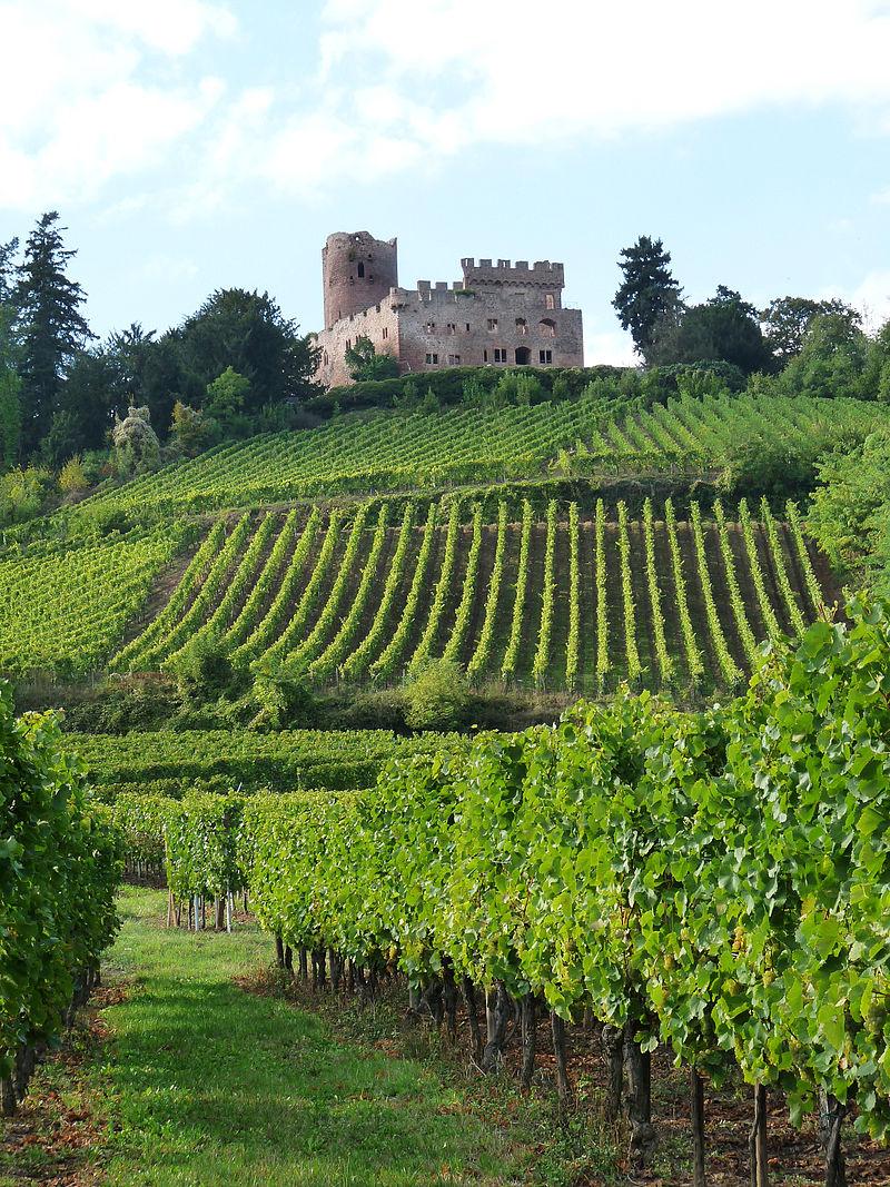 Kintzheim-Château-Vignoble_(1) эльзас.jpg