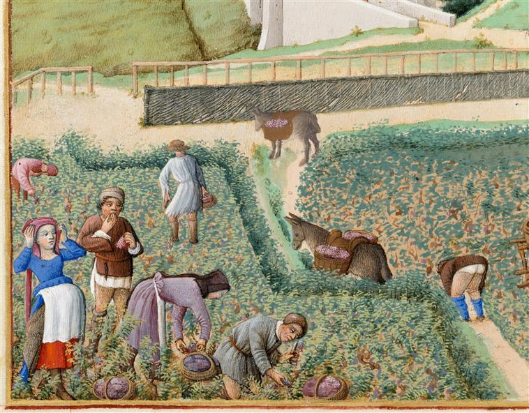 Les Très Riches Heures du duc de Berry vine grape harvest september.jpg