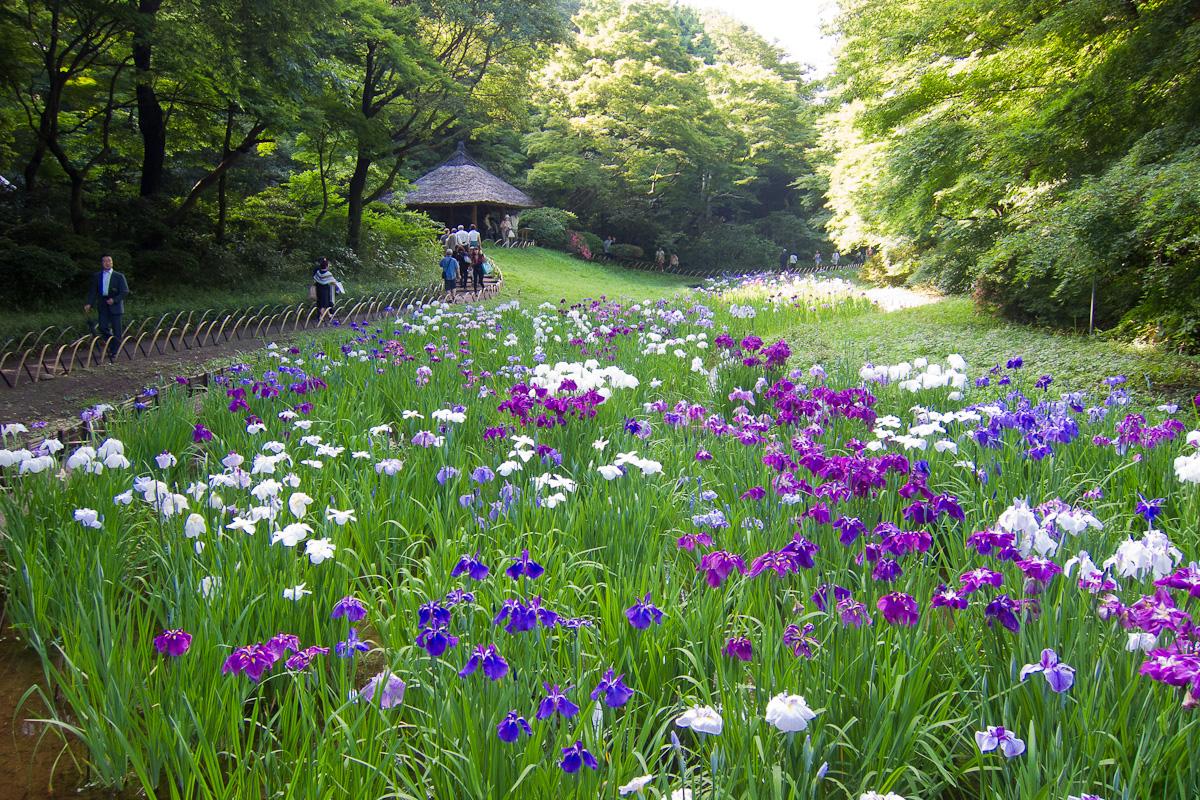 Meiji-Shrine-Innergarden-02.jpg