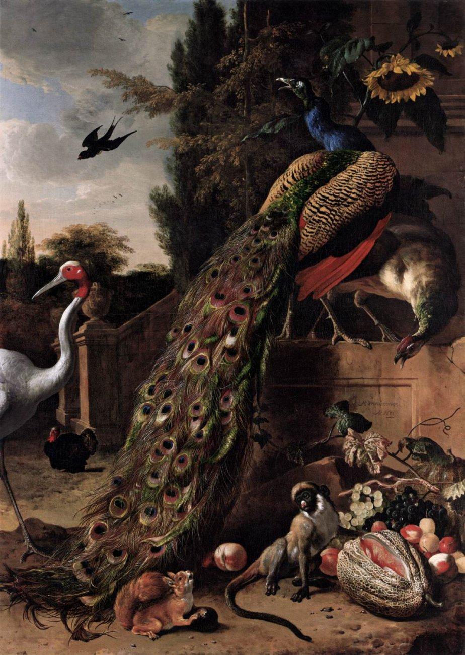 MELCHIOR DE HONDECOETER (1636- 1695).peacock.jpg