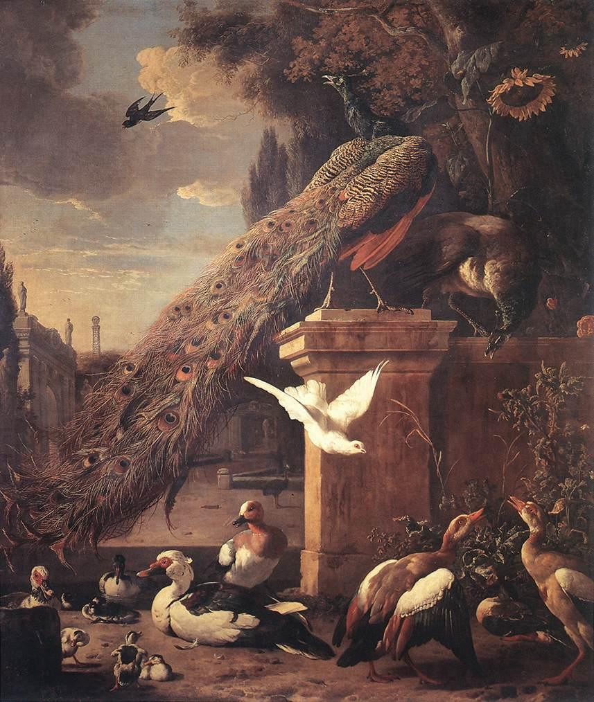 MELCHIOR DE HONDECOETER (1636- 1695).peacocks.jpg