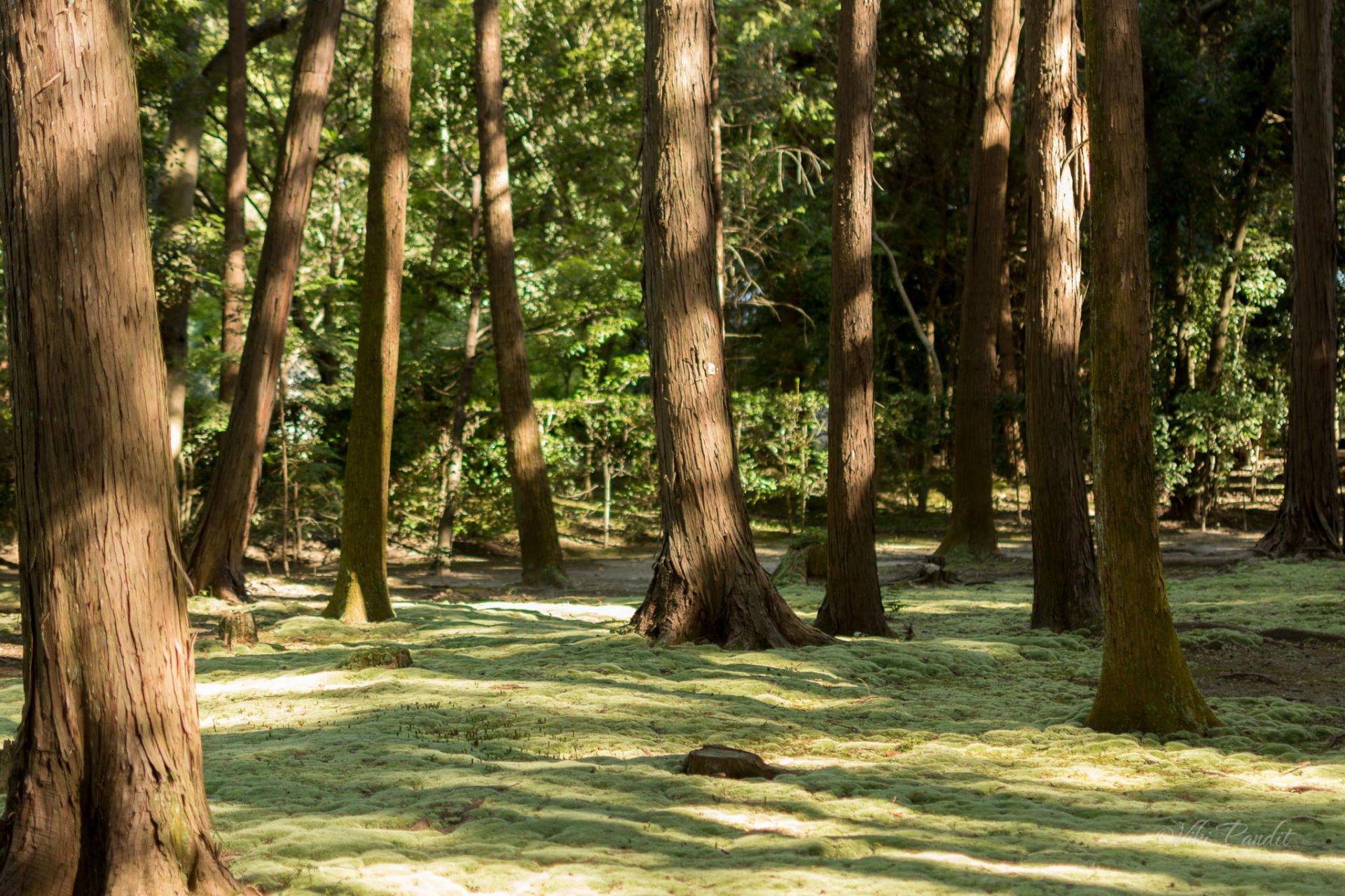Moss-Garden-Toshodaiji.jpg