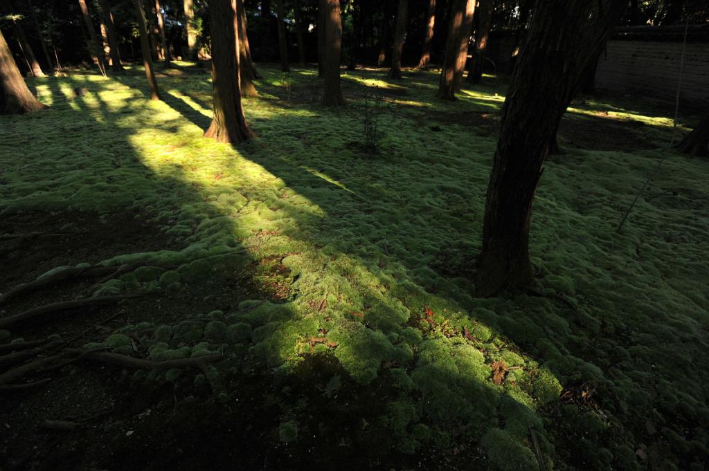 mud_and_moss_toshodaiji_nara_7121.jpg