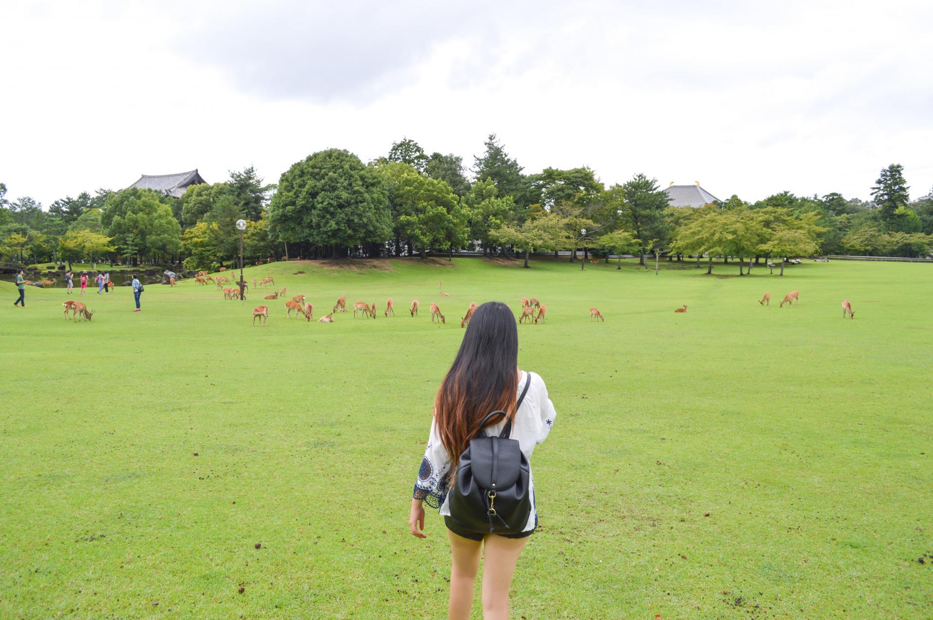 Nara-Park-01.jpg