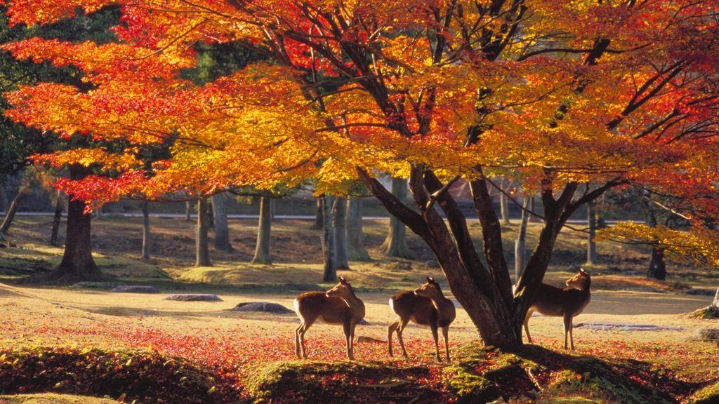 nara-park-autumn.jpg