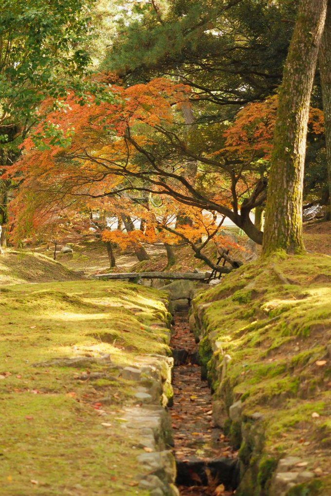 Nara-Park-Gardens-680x1020.jpg