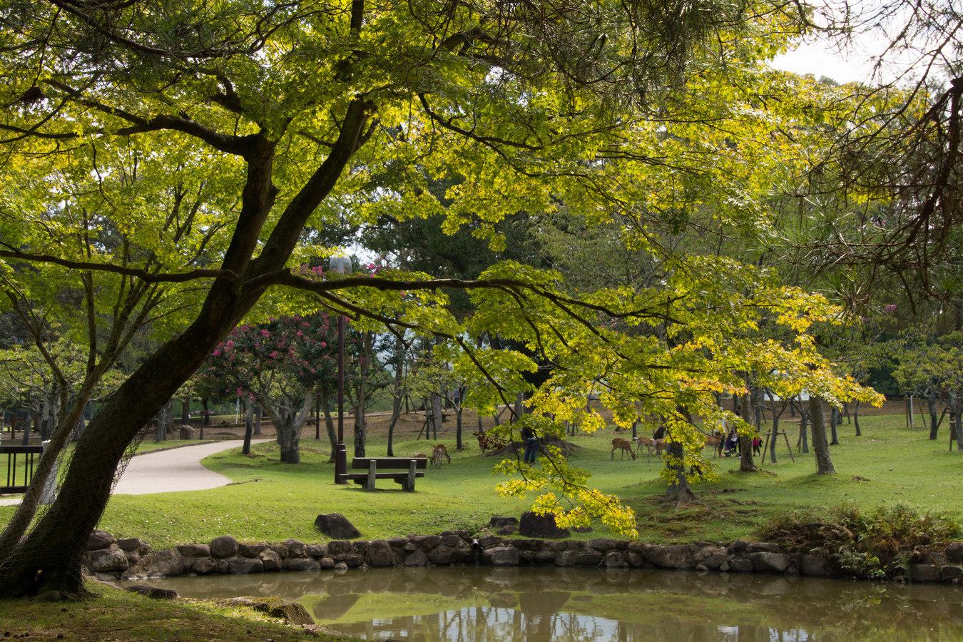 Nara.Park.original.34415.jpg
