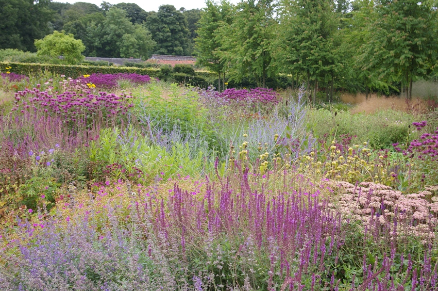 perennial meadow Scampston.JPG