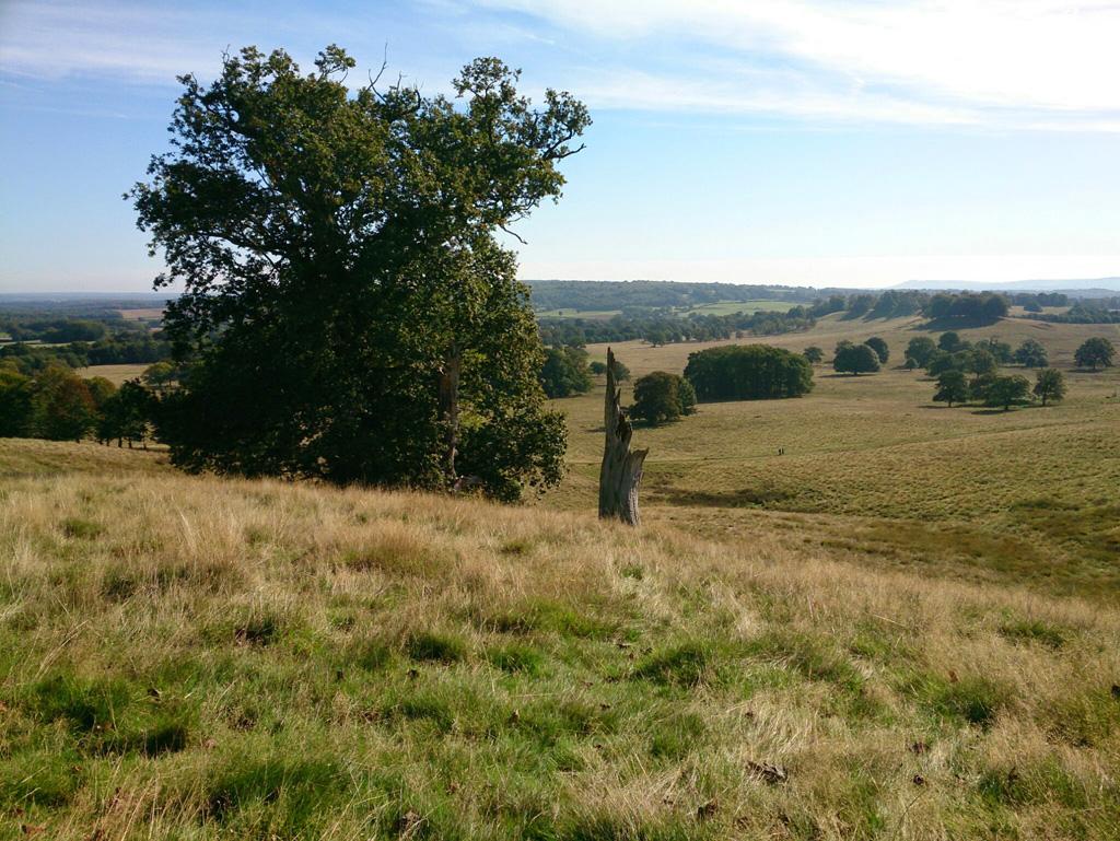 Petworth-Park-Sussex-3.jpg