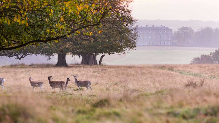 Petworth+Park+to+see+the+Deer.jpg