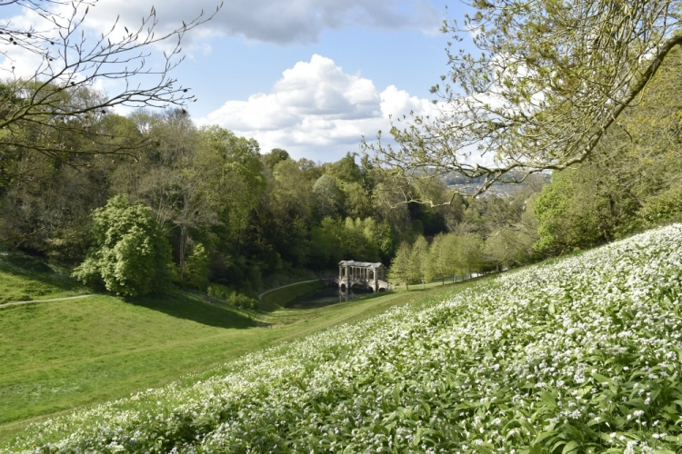 Prior_Park_spring_Pasture_bridge_garlic_view_Rachel_Beaumont_visitbath_750_500_s_c1.jpg