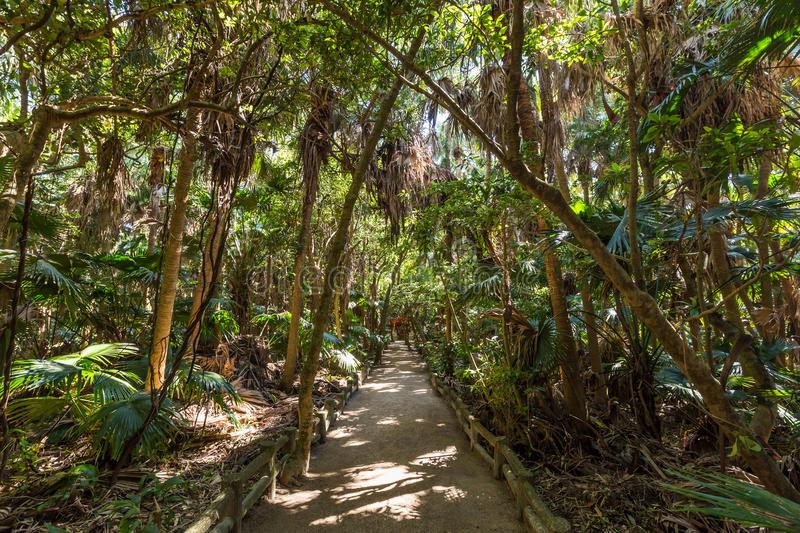 rain-forest-park-aoshima-shrine-miyazaki-japan-89396343.jpg
