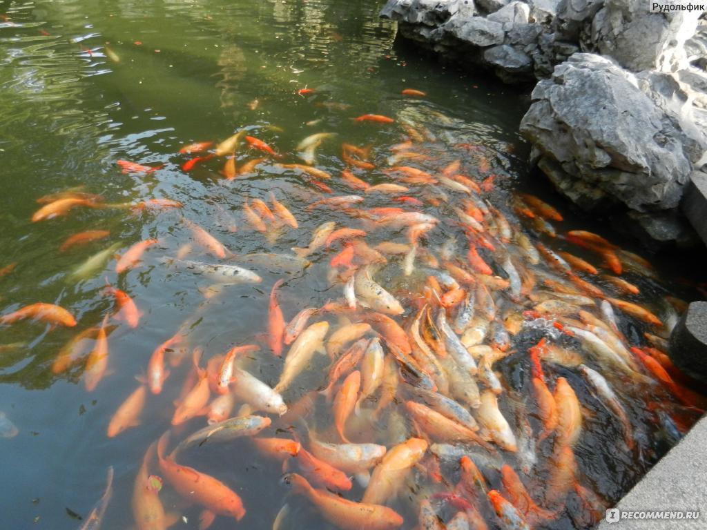 rybki.jpg