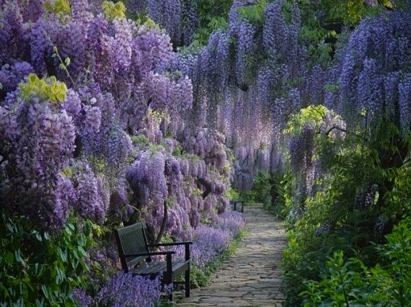 sad-cvetov-Kavati-Fudzi-Kawachi-Fuji-Garden.jpg