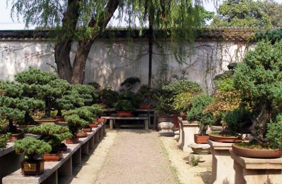 sady-suzhou-bonsaj.jpg