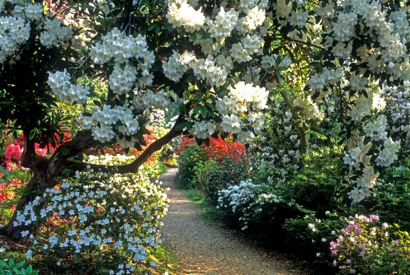 sadyi_leonardsli_leonardslee_gardens_ (1).jpg