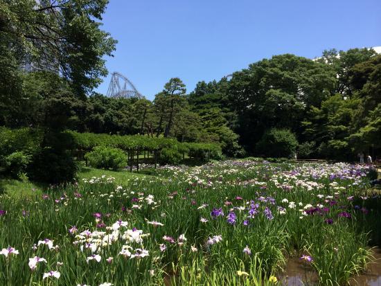 sankeien-gardens.jpg