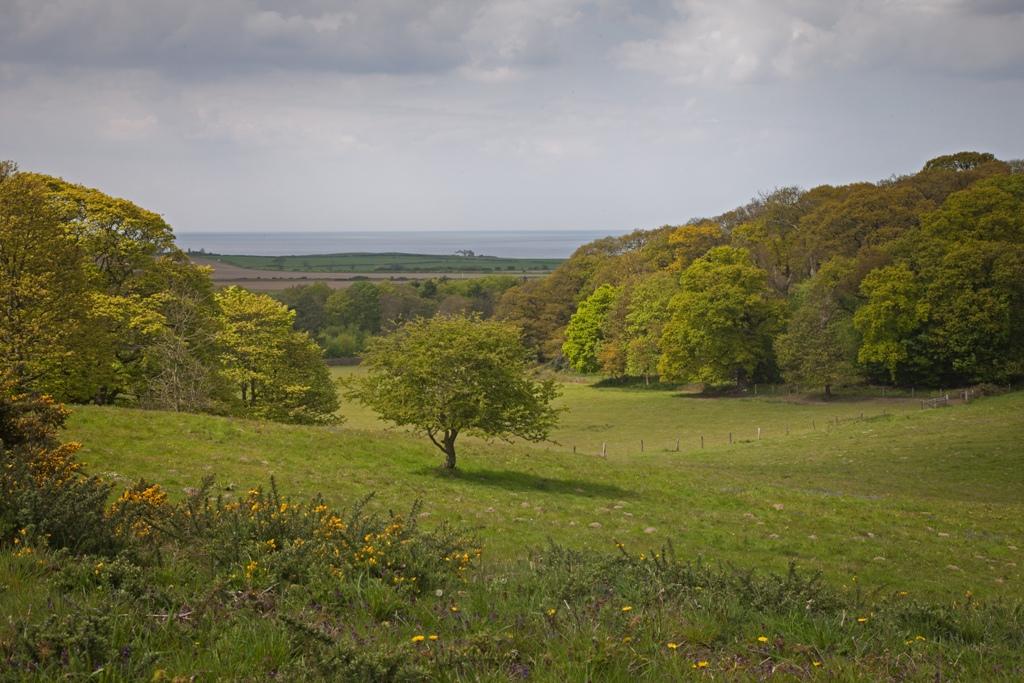 Sheringham-Park-2-credit-National-Trust-Images-Rod-Edwards.jpg