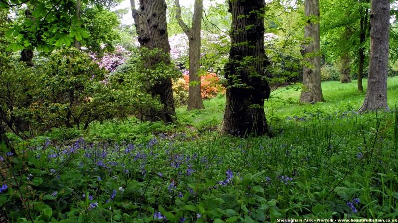 sheringham_park-3-800x450.jpg