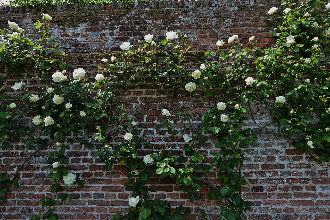SISSINGHURST_CASTLE_In_the_Rose_Garden.JPG