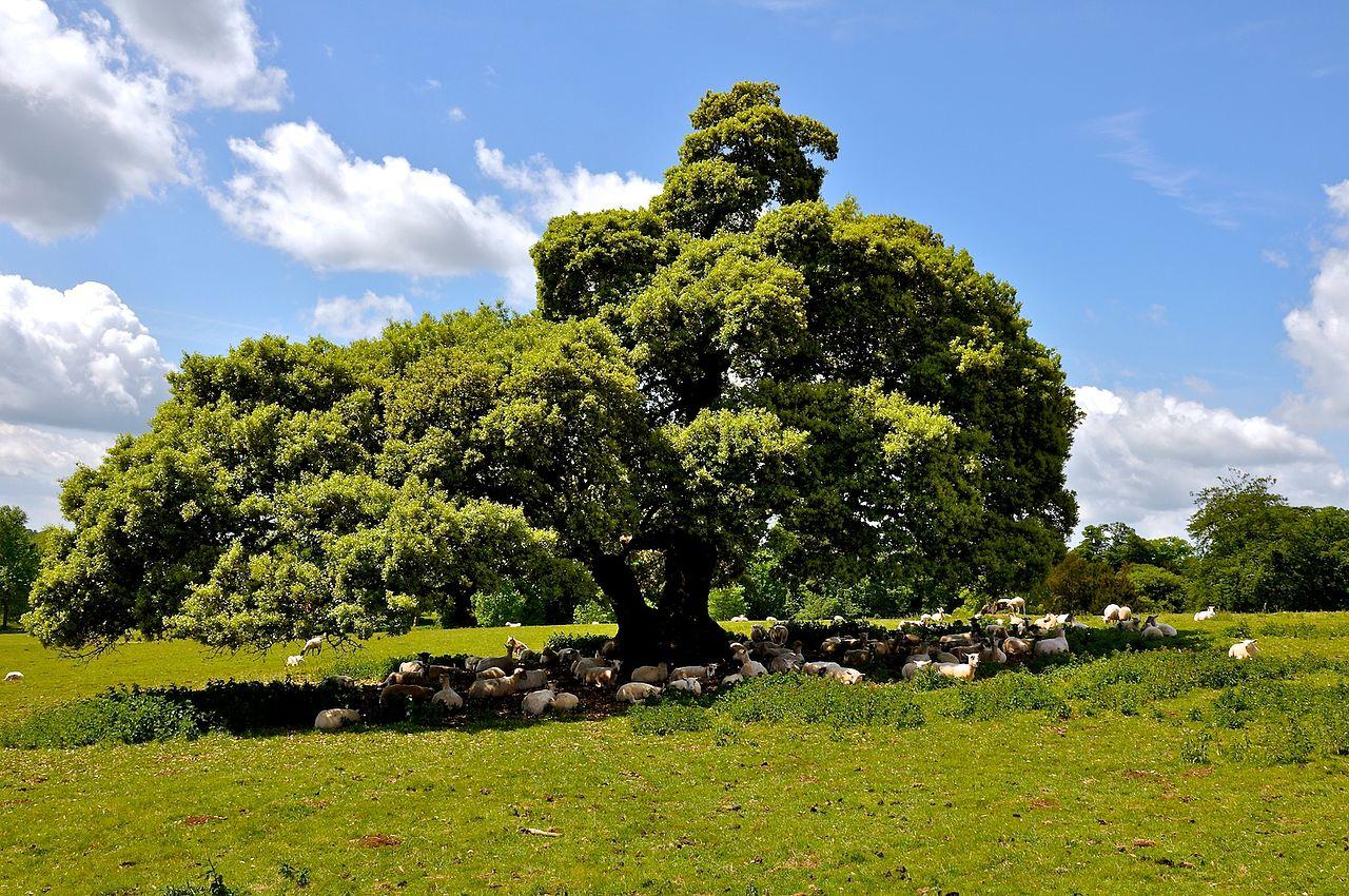 Stowe_Park,_Buckinghamshire_(4663845659).jpg