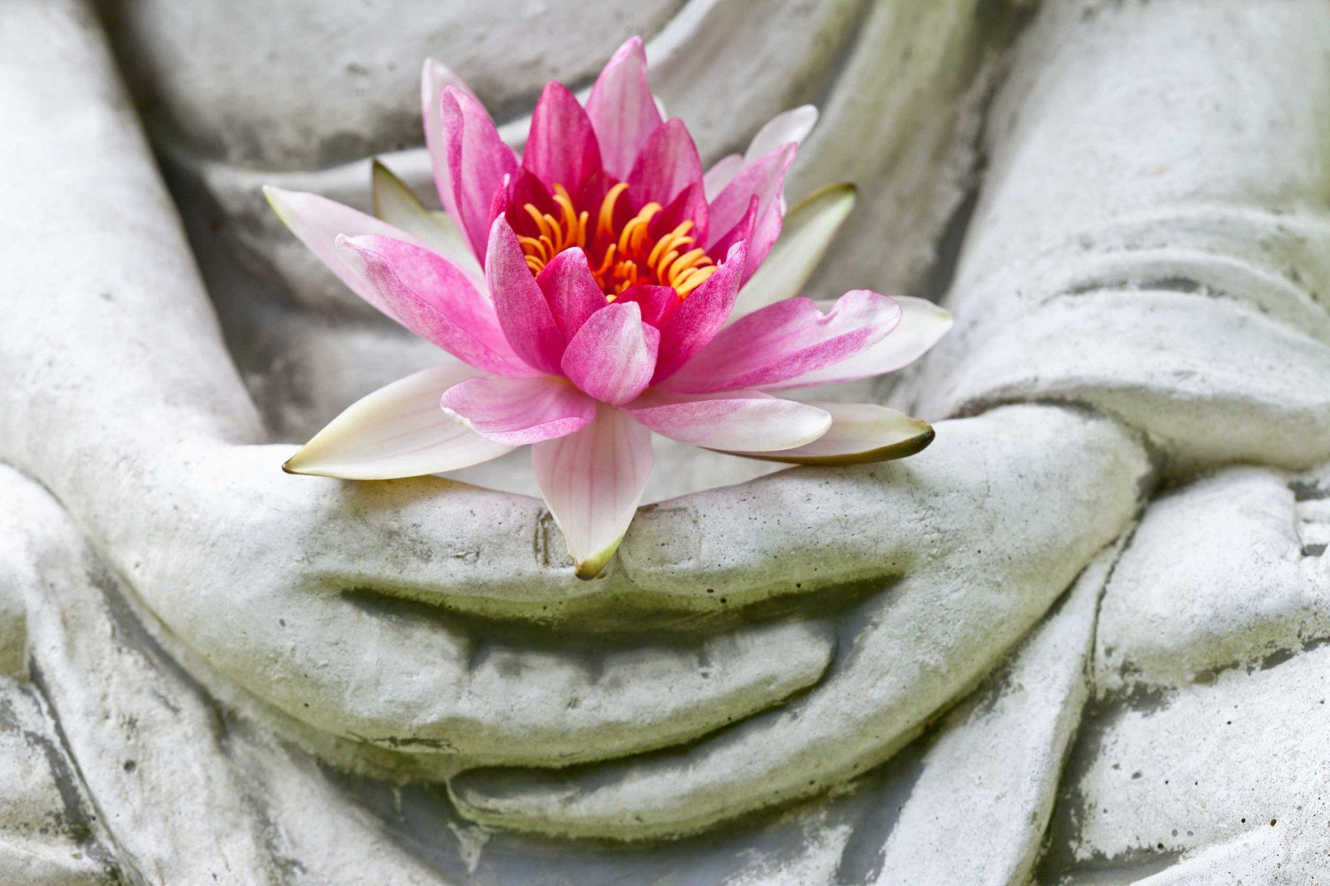 Svyashhennyy-cvetok-buddizma.jpg