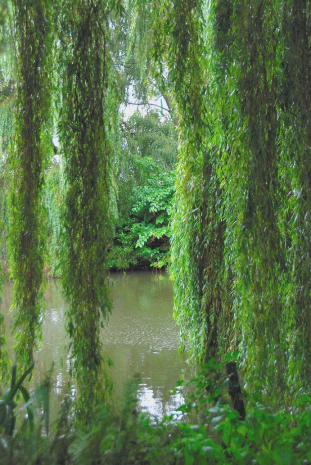 the-beth-chatto-gardens-weeping-willow-or-sweeping-willow-what-is-fashionable-for-men.jpg