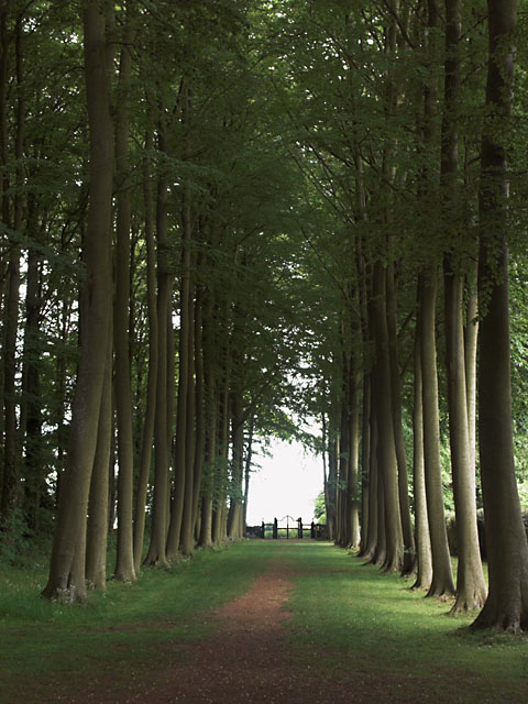 The_Beech_Avenue_at_Hidcote_Manor_-_geograph.org.uk_-_447138.jpg