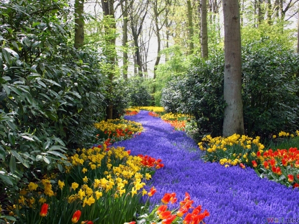 thumb3_spring_flowers_7.jpg