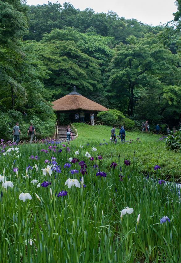tokyo-meiji-shrine-inner-garden-iris-reffert-2g.jpg