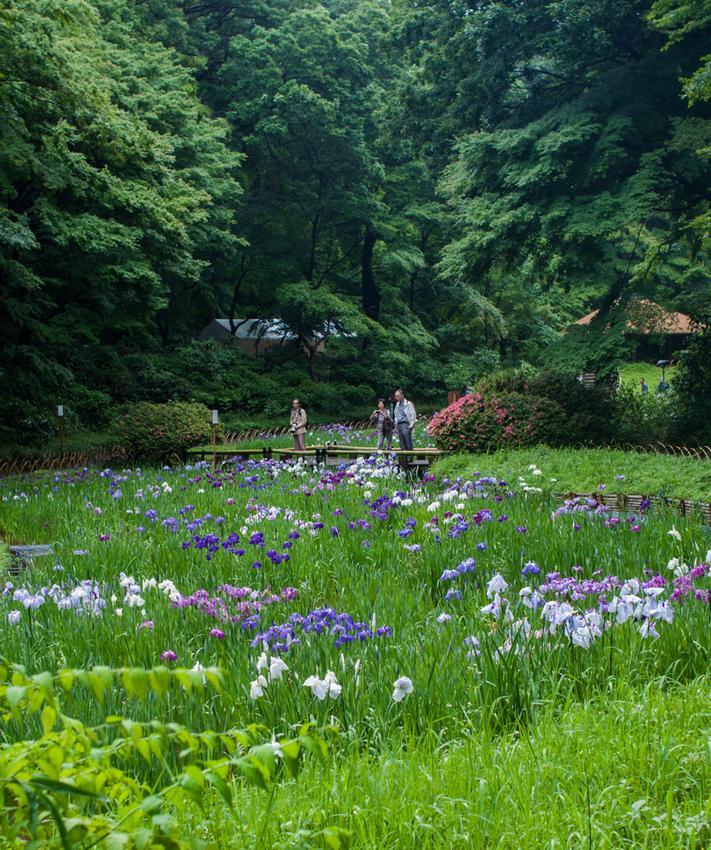 tokyo-meiji-shrine-inner-garden-iris-reffertf.jpg