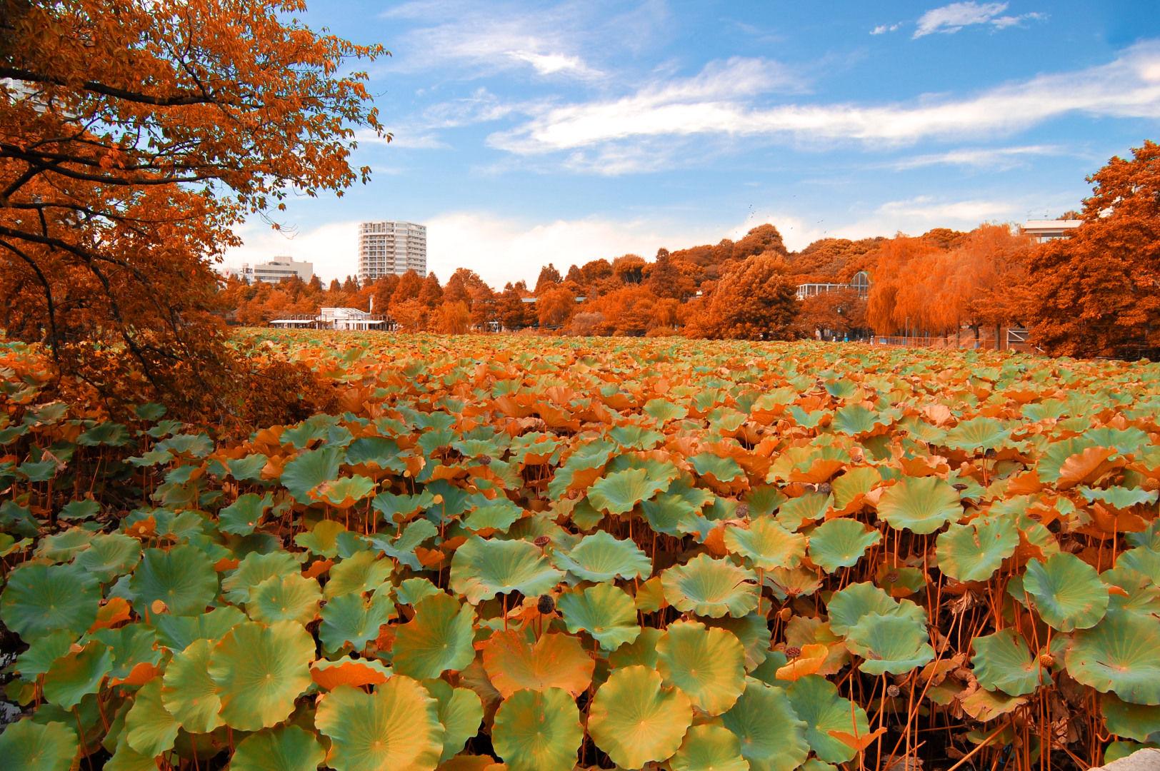 Ueno-Park-Autumn.jpg
