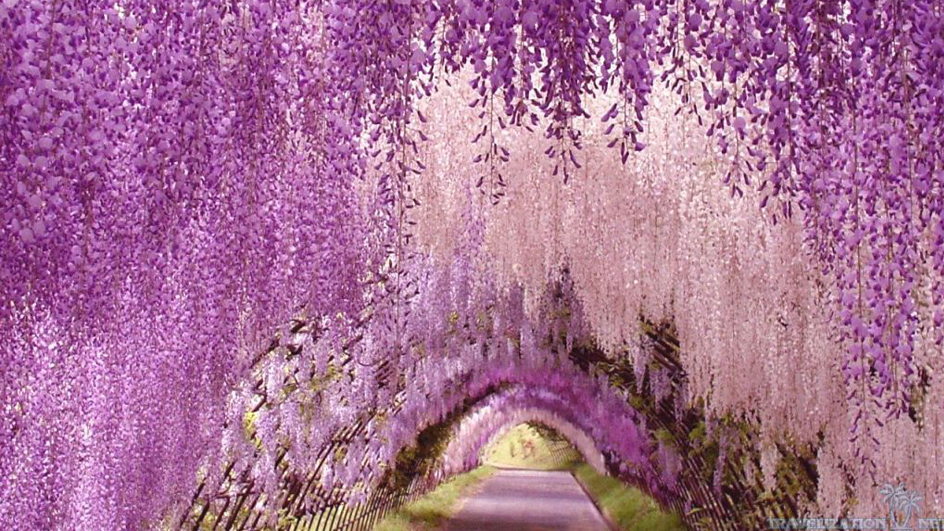 wallpaper-Ashikaga-flower-park-awesome2.jpg