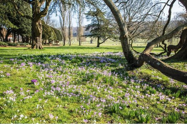 west-dean-gardens-cr-judi-lyon-lowres.jpg