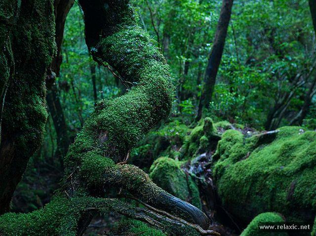 Yakushima-Island_00008.jpg