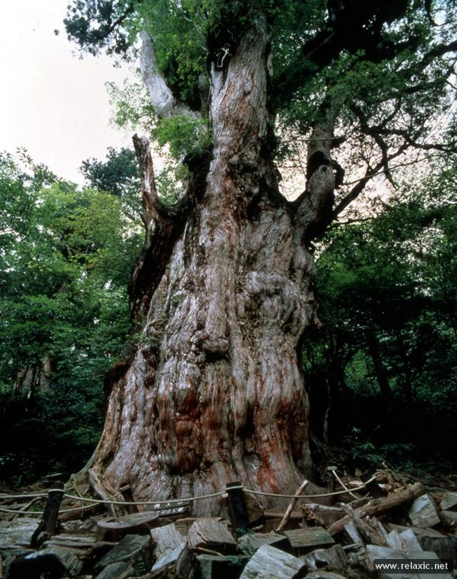 Yakushima-Island_00015.jpg